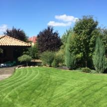 trawnik-w-ogrodzie