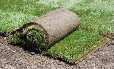 układanie trawnika z rolki w ogrodzie Lublin