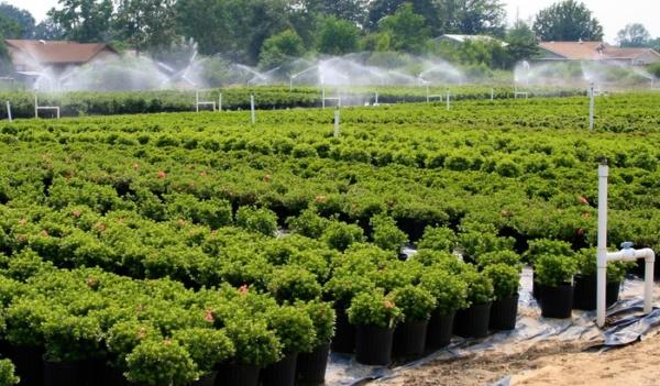 Nawadnianie upraw polowych lublin. Zraszacze polowe do nawadniania upraw warzywnych i szkółek roslin ozdobnych.
