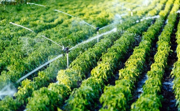 Nawadnianie upraw polowych szklarniowych