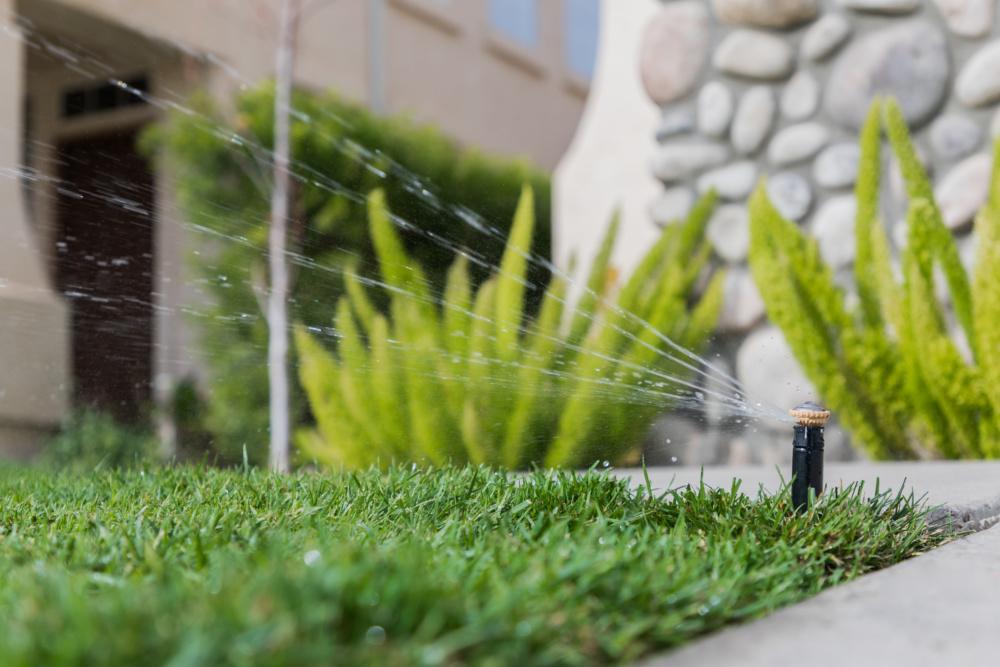 Jak dbac o trawnik w lecie. Podlewanie trawnika latem. Nawożenie trawnika w lecie.