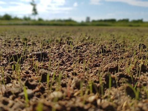 po-jakim-czasie-schodzi-trawa