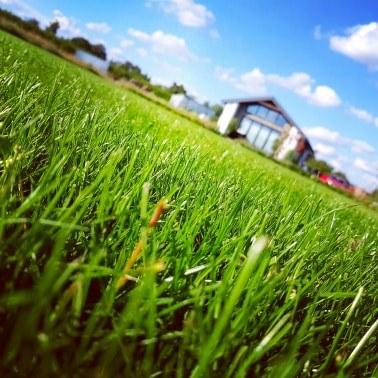 najładniejsze-trawniki-jak-pielęgnować